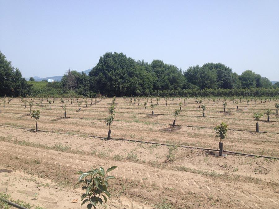 Irrigazione con aggiunta di fertilizzanti
