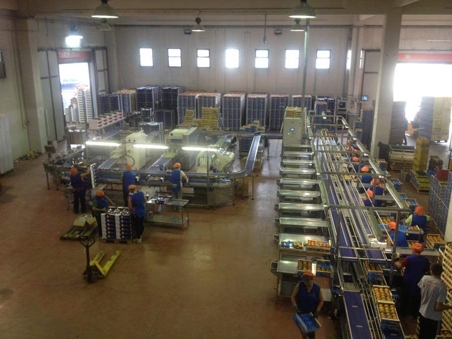 Persimmon packaging plant