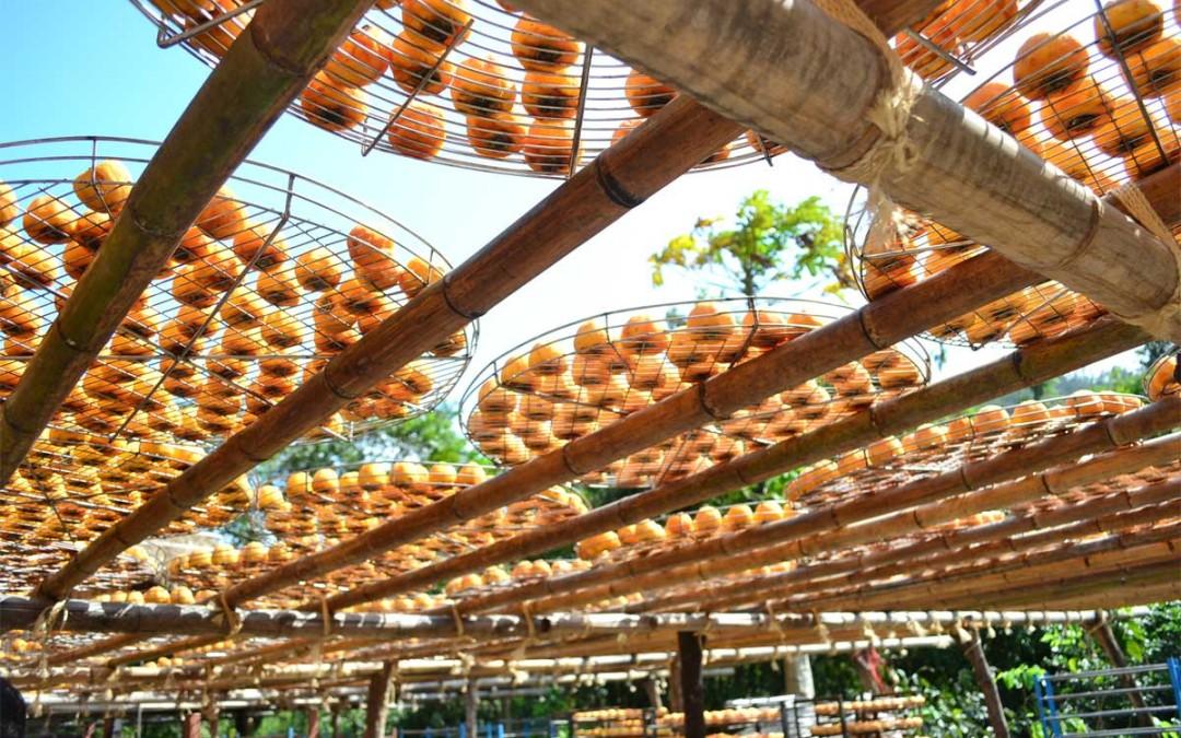 I Kaki (persimmon): un'elenco delle Cultivar nel mondo